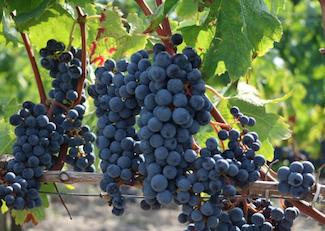 カリフォルニアワイン日本発送 挿絵